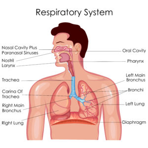 When Breathing Doesn't Come Naturally | El Camino Health |Respiratory System Organs And Functions